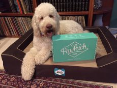 Paw Pack Pet Gift Guide