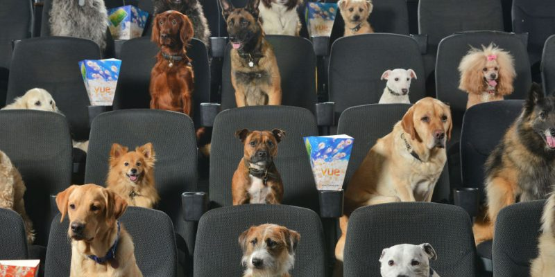 Dog film festival in seats