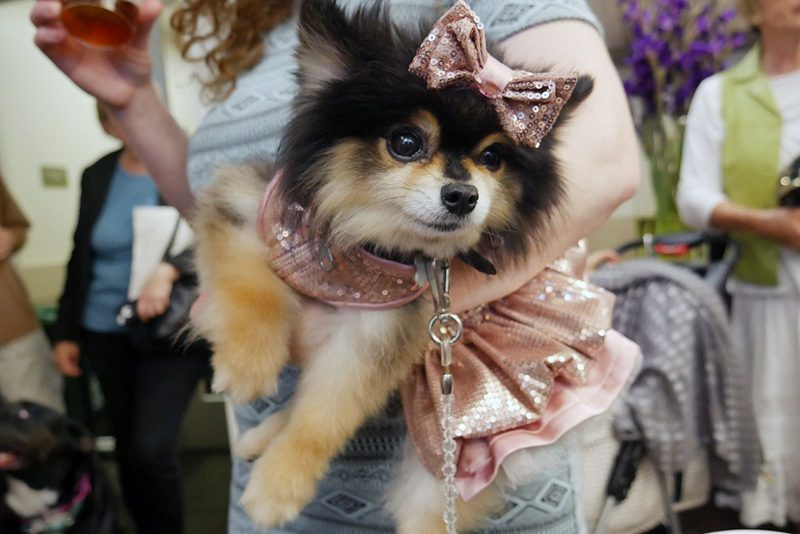 dog-film-festival-pooch-tea-party-bow