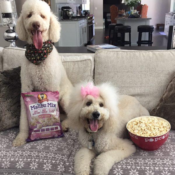 Gaslamp Popcorn's Malibu Mix