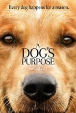 Dog's Purpose Review Gold Review