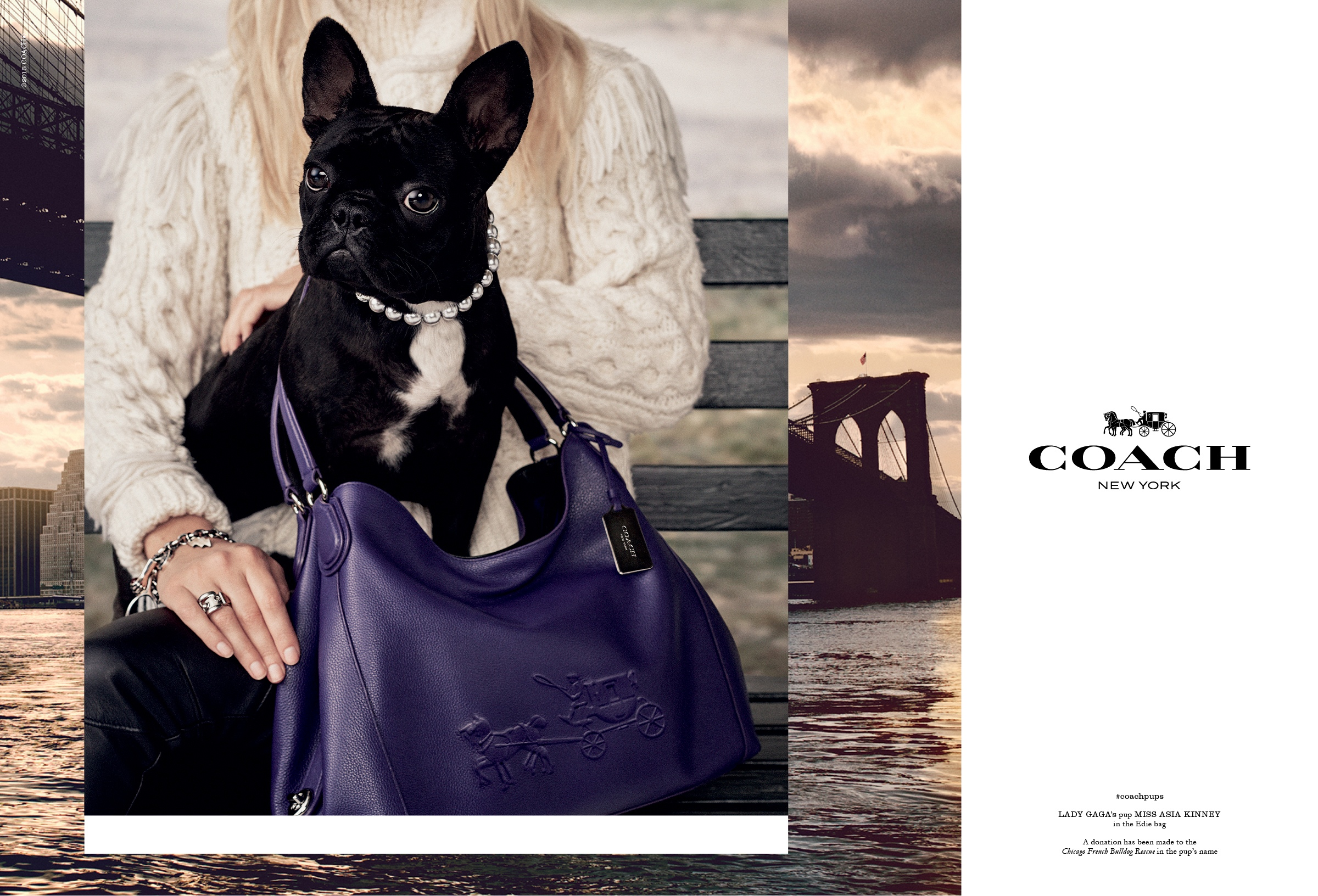Lady Gaga's French Bulldog is new face of Coach