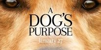 Dogs purppose review gold review